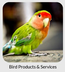 bird products services
