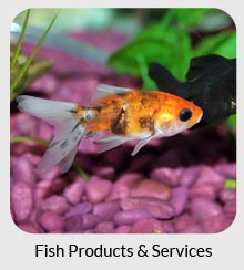 aquariums, ponds and fish products