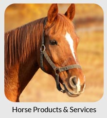 horse equine services