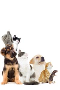 Fairway Importers Ltd (Pet Products Online)