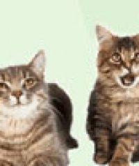 Mossdale Cat Boarding Kennels