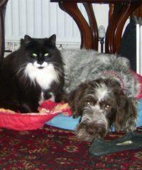 Maesteg Animal Welfare Society