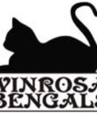 Winrosa Bengals