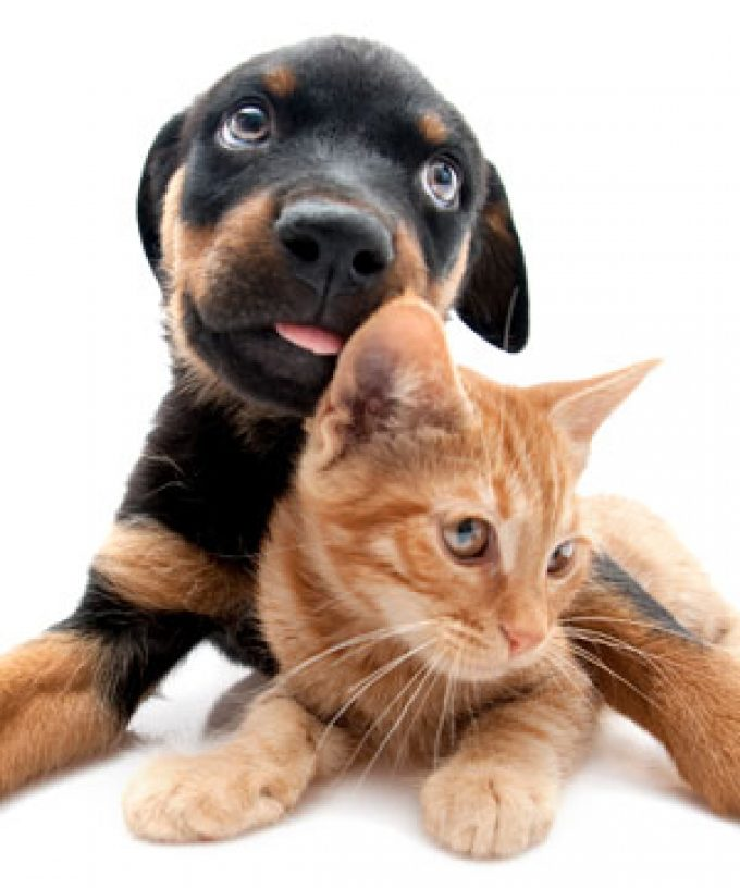Happi Tails Home & Pet Sitting Services