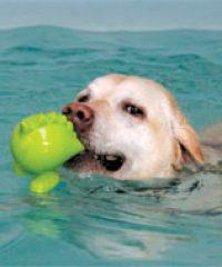 Bearhugs Canine Hydrotherapy