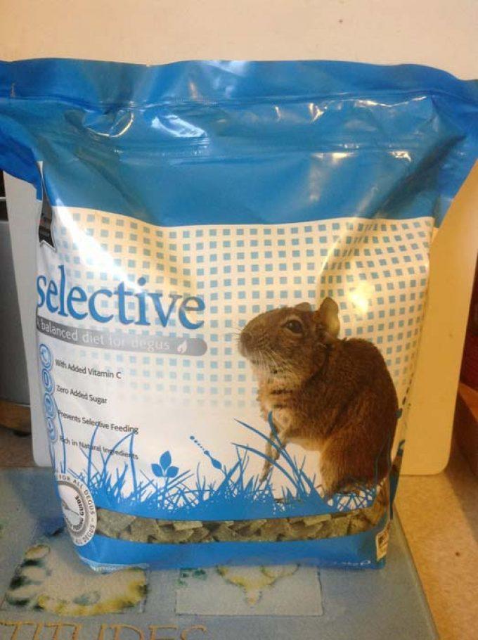 Collies Pet Food Supplies